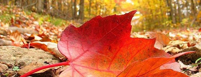 otoño - Espacio Atenea